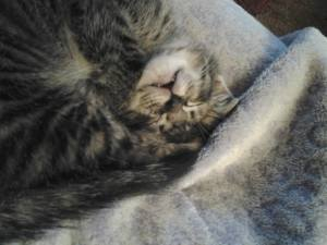 Curled-up Kitten Sleepies... so cute!
